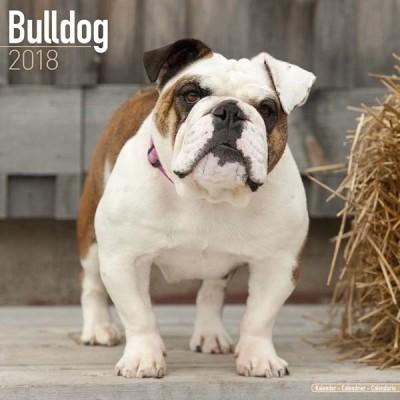 Kalender Engelse Bulldog 2018 - Avonside Publishing - voorblad