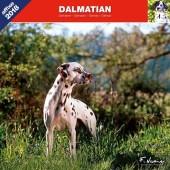 Kalender Dalmatische Hond 2018 - Affixe Editions - voorblad