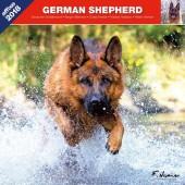 Kalender Duitse Herdershond 2018 - Affixe Editions - voorblad