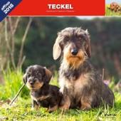 Kalender Teckel 2018 - Affixe Editions - voorblad