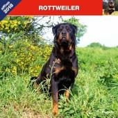 Kalender Rottweiler 2018 - Affixe Editions