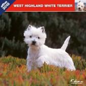 Kalender West Highland White Terrier 2018 - Affixe Editions - voorblad