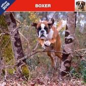 Kalender Boxer 2018 - Affixe Editions - voorblad