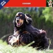 Kalender Cocker Spaniel 2018 - Affixe Editions - voorblad