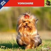 Kalender Yorkshire Terrier 2018 - Affixe Editions - voorblad