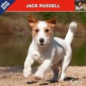 Kalender Jack Russell Terrier 2018 - Affixe Editions - voorblad