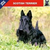 Kalender Schotse Terrier 2018 - Affixe Editions - voorblad