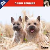 Kalender Cairn Terrier 2018 - Affixe Editions - voorblad