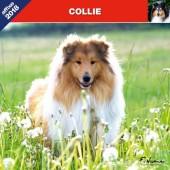 Kalender Schotse Herdershond / Collie 2018 - Affixe Editions - voorblad