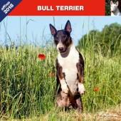 Kalender Bull Terrier 2018 - Affixe Editions - voorblad