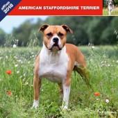 Kalender American Staffordshire Terrier 2018 - Affixe Editions - voorblad