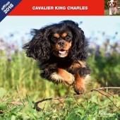Kalender Cavalier King Charles Spaniel 2018 - Affixe Editions - voorblad