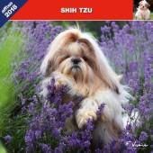 Kalender Shih Tzu 2018 - Affixe Editions - voorblad