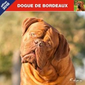 Kalender Bordeaux Dog 2018 - Affixe Editions - voorblad