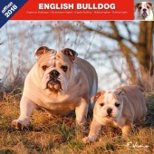 Kalender Engelse Bulldog 2018 - Affixe Editions