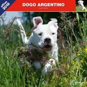 Kalender Argentijnse Dog 2018 - Affixe Editions - voorblad