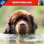 Kalender Newfoundlander 2018 - Affixe Editions - voorblad