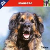 Kalender Leonberger 2018 - Affixe Editions - voorblad