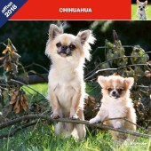 Kalender Chihuahua 2018 - Affixe Editions - voorblad