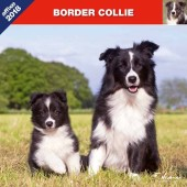 Kalender Border Collie 2018 - Affixe Editions - voorblad