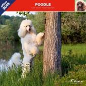 Kalender Poedel 2018 - Affixe Editions - voorblad