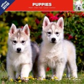 Kalender Puppies 2018 - Affixe Editions - voorblad
