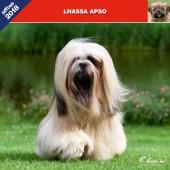 Kalender Lhasa Apso 2018 - Affixe Editions - voorblad