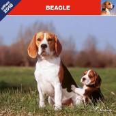 Kalender Beagle 2018 - Affixe Editions - voorblad