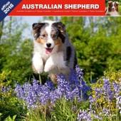 Kalender Australian Shepherd 2018 - Affixe Editions - voorblad
