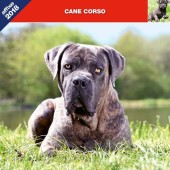 Kalender Cane Corso 2018 - Affixe Editions - voorblad