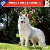 Kalender Zwitserse Witte Herder 2018 - Affixe Editions - voorblad