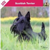 Kalender Schotse Terrier 2016