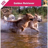 Kalender Golden Retriever 2016