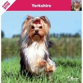 Kalender Yorkshire Terrier 2016