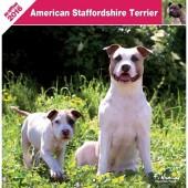 Kalender American Staffordshire Terrier 2016