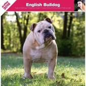 Kalender Engelse Bulldog 2016