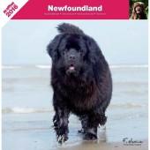 Kalender Newfoundlander 2016