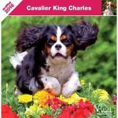 Kalender Cavalier King Charles Spaniel 2016
