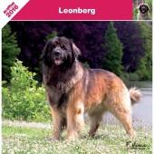 Kalender Leonberger 2016