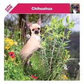 Kalender Chihuahua 2016