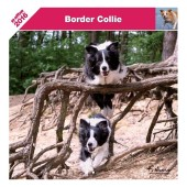 Kalender Border Collie 2016