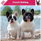 Kalender Franse Bulldog 2016