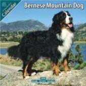 Kalender Berner Sennenhond 2010