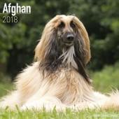 Kalender Afghaanse Windhond 2018 - Avonside Publishing - voorblad