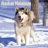 Kalender Alaska Malamute 2018 - Avonside Publishing - voorblad