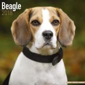 Kalender Beagle 2018 - Avonside Publishing - voorblad