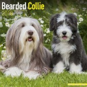 Kalender Bearded Collie 2018 - Avonside Publishing - voorblad