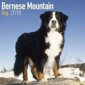 Kalender Berner Sennenhond 2018 - Avonide Publishing - voorblad