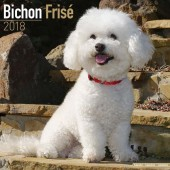 Kalender Bichon Frisé 2018 - Avonside Publishing - voorblad
