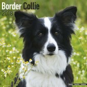 Kalender Border Collie 2018 - Avonside Publishing - voorblad